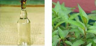 Chăm sóc sức khoẻ: Bài thuốc chữa hắc lào bằng rau răm tại nhà hiệu quả Bai-thuoc-chua-hac-lao-bang-rau-ram-ngam-ruou